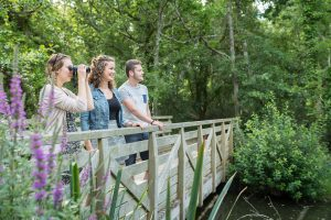 Observation de la nature dans le Marais de Mousterlin à Fouesnant