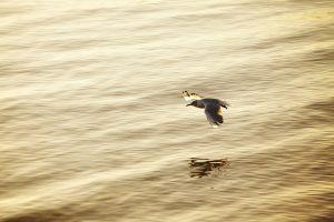 Vol d'oiseau à Mousterlin