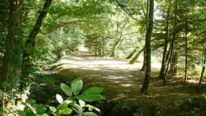 Le bois de Penfoulic à Fouesnant