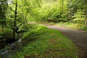 La forêt à Ty Broen Saint-Evarzec