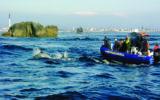 Archipel Excursions – Penmarc'h – Pays Bigouden4