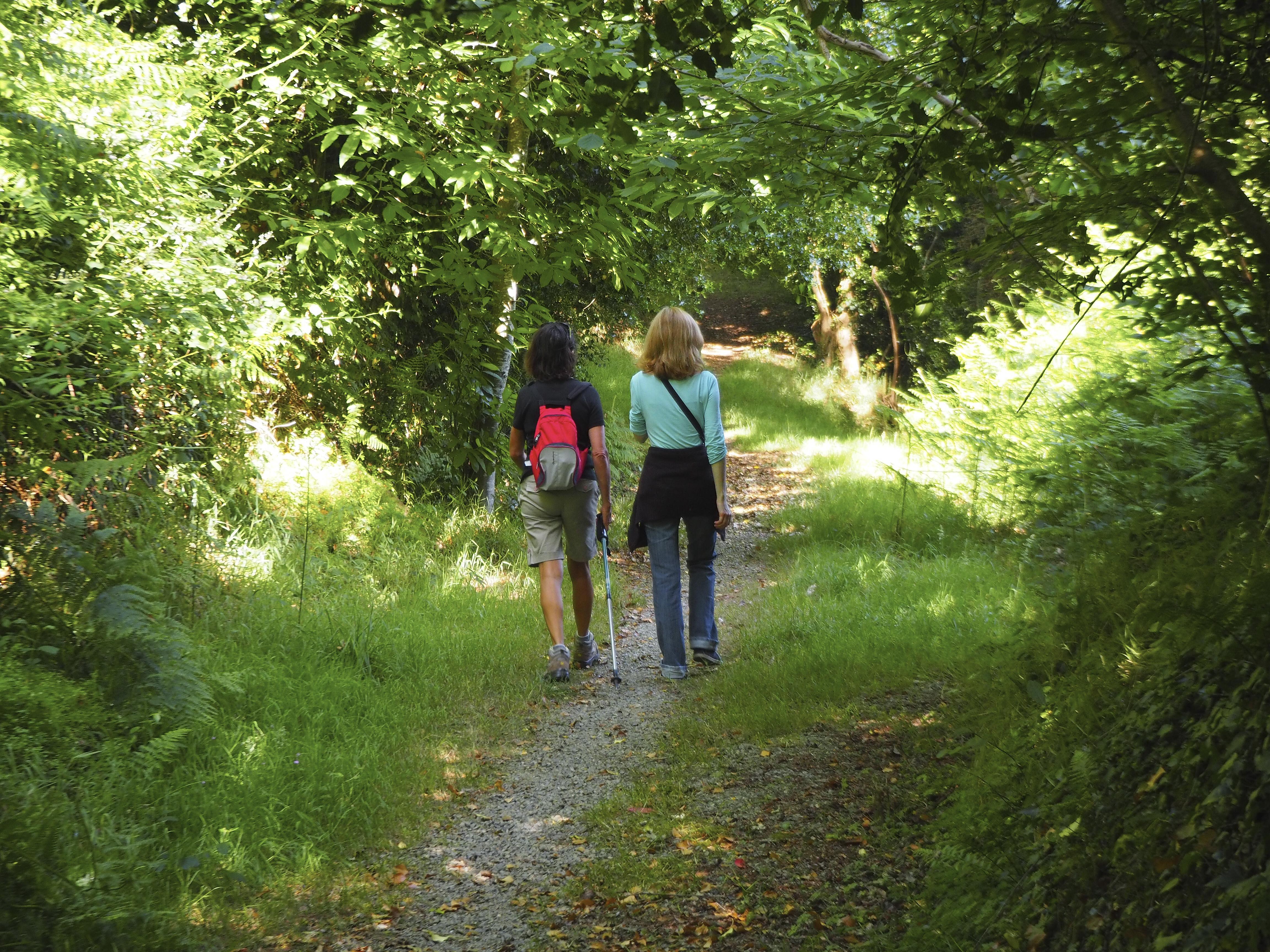 Sentier forestois