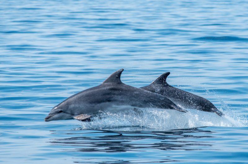 Faune-Ocean—PHOTO-PRINCIPALE—grand-dauphin—sebastien-roques