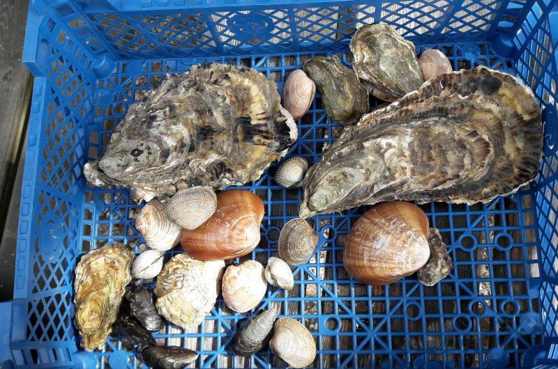 Production de coquillages des Viviers