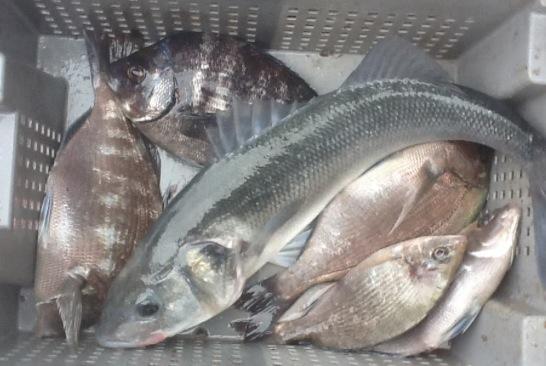 santamaria-poissons